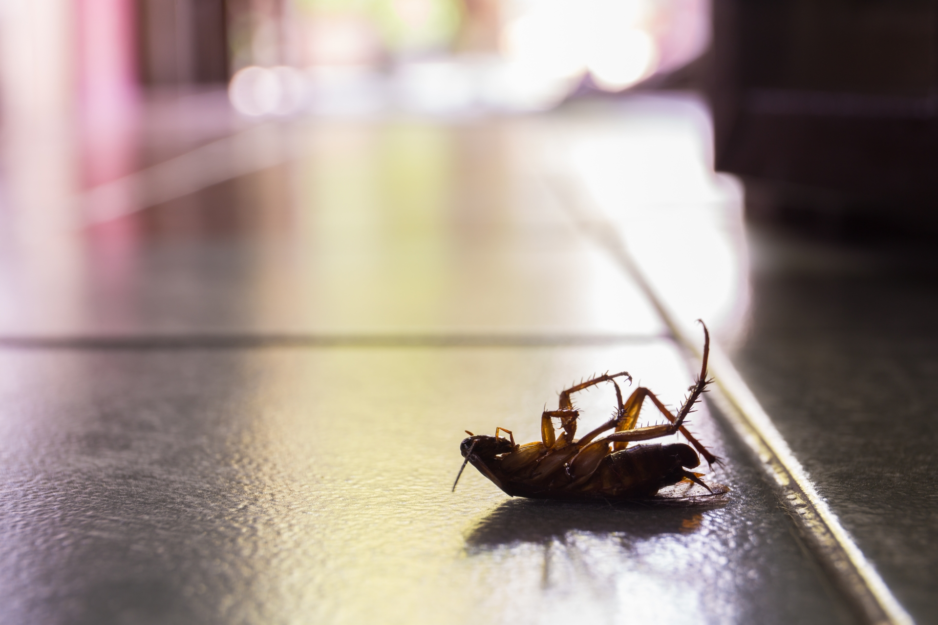 Cockroach Control, Pest Control in Redbridge, IG4. Call Now 020 8166 9746