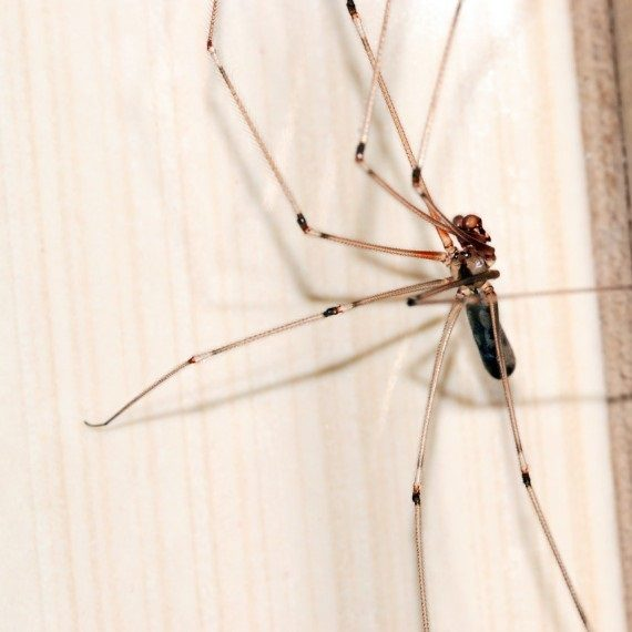 Spiders, Pest Control in Redbridge, IG4. Call Now! 020 8166 9746
